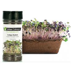 Indigo Radish Seeds (160 g)