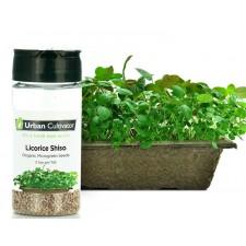 Licorice Shiso Seeds (26g)