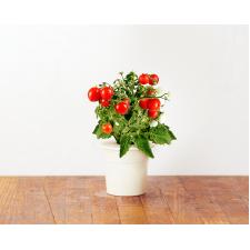 Mini-tomaatjes navulverpakking (3 pakjes)