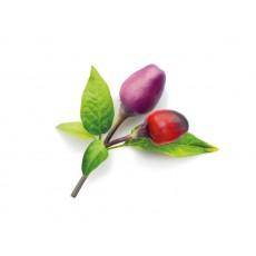 Piment violet - Kit de remplissage (paquet de 3)