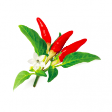 Red Hot Chili Pepper (3 pack)