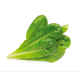 Romaine refill (3 pack)