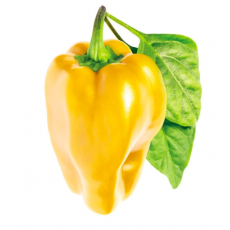 Yellow Sweet pepper refill (3 pack)