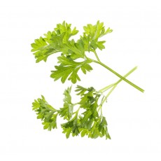 Parsley - Seed pods