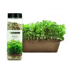 Sugar Pea Seeds (695g)