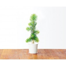 Spruce refill (3 pack)