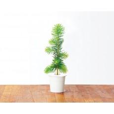 Recarga de Picea (Pack de 3)